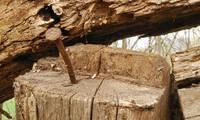 Clavadora contra clavo y martillo